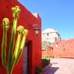 Kloster Santa Catalina, Arequipa