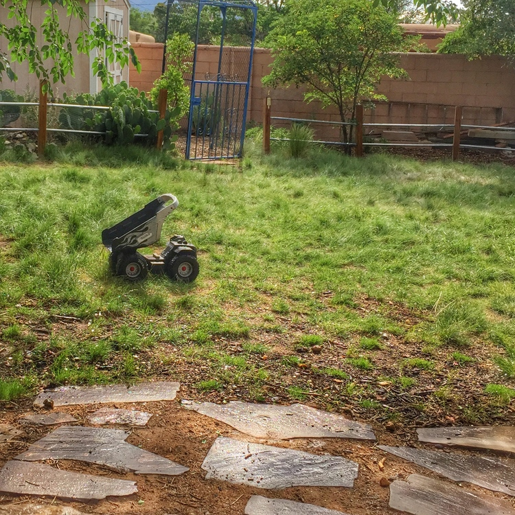 HIGH TRAFFIC AREA OF MY YARD FRESHLY PLANTED WITH THE DOG TUFF PLUGS.