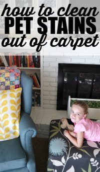 How to Clean Pet Stains out of Carpet - My Life and Kids