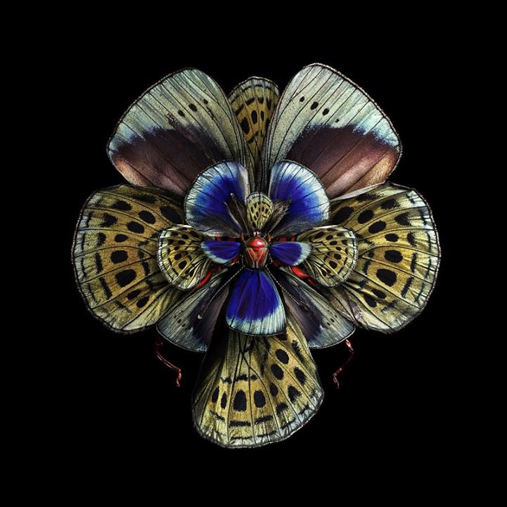 design de flores