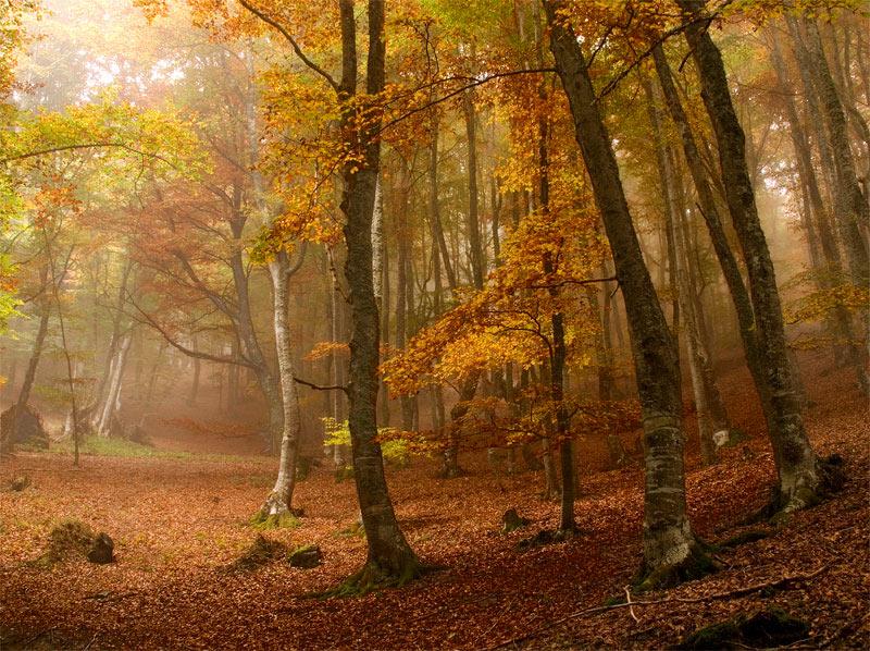 Fall Deer Wallpaper Amazing Autumn Forests 15 Photos