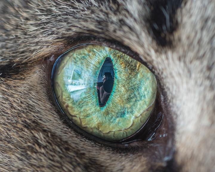 Cheetah Wallpaper Hd Mesmerizing Macro Photos Of Cats Eyes By Andrew Marttila