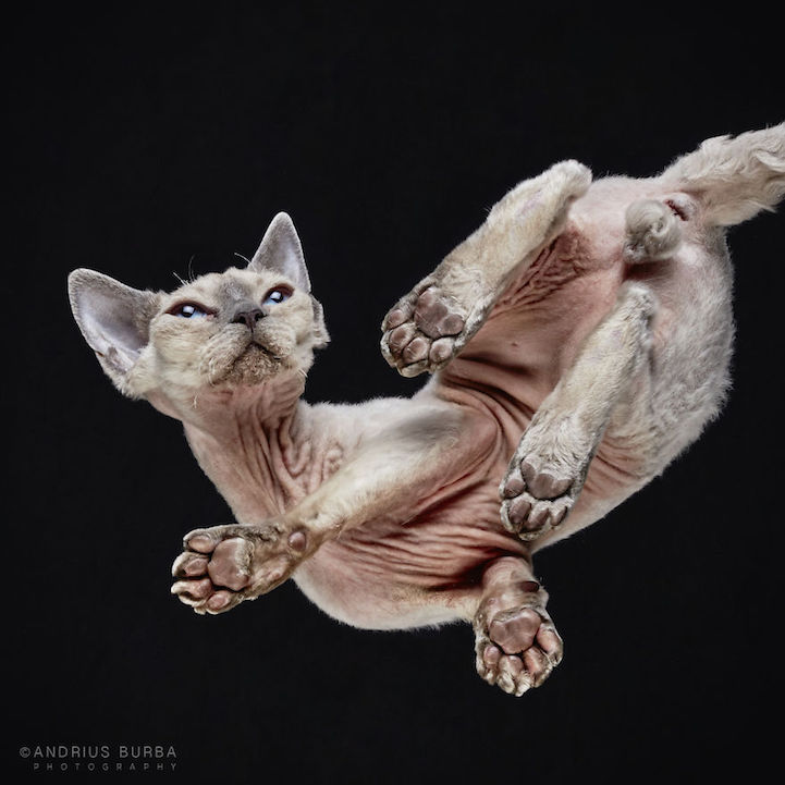 Cute Initial Wallpaper Adorable Underbelly Of Cats Cleverly Revealed By