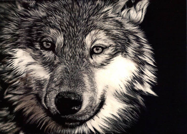 Beautiful Scratchboard Portraits Of Animals By Allan Ace