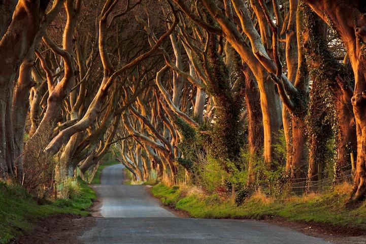 Foggy Fall Wallpaper The Dark Hedges Ireland S Beautifully Eerie Tree Lined Road
