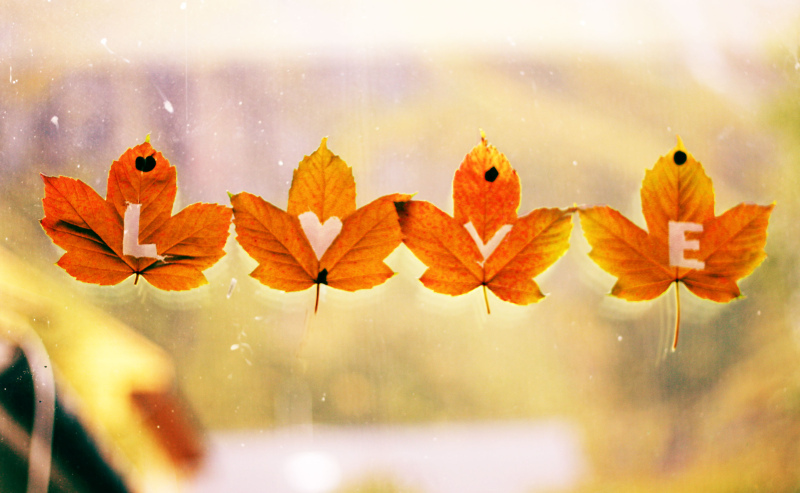 Fall Heart Leaves Background Wallpaper Wednesday Eu Mak Autumn Love