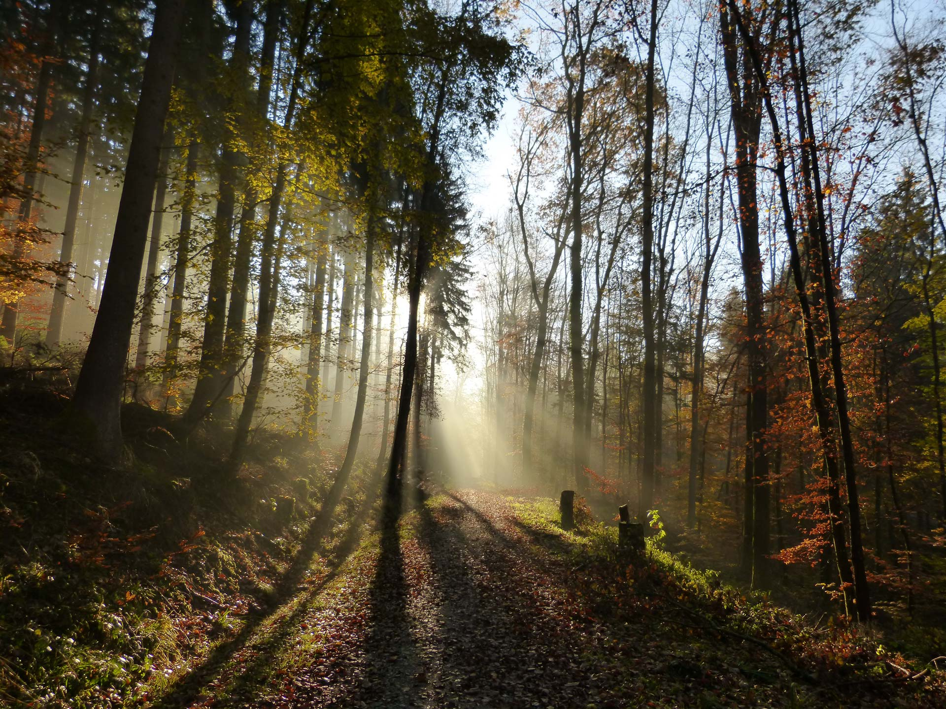 Calming Fall Wallpaper Hd Spring Walk Relaxing Nature Sounds Wandering Ambience
