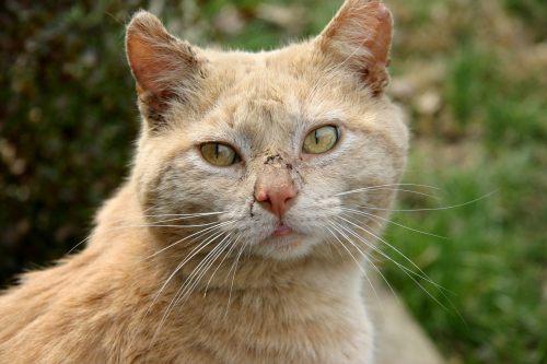 Medium Of Scabs On Cat