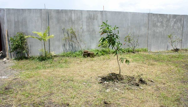 early_plantings_wall