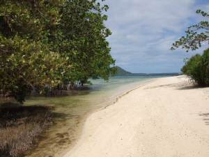 White sand and thriving mangroves - Nogas Island Reserve
