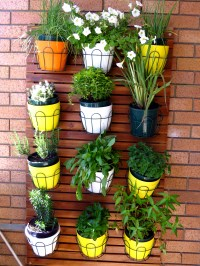 What Plants Grow Best on a Balcony Garden ...