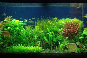 Aquarium-background-wallpaper