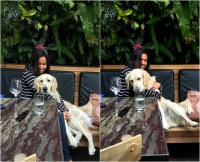 dog-friendly dining at the patio on goldfinch - My SoCal'd ...