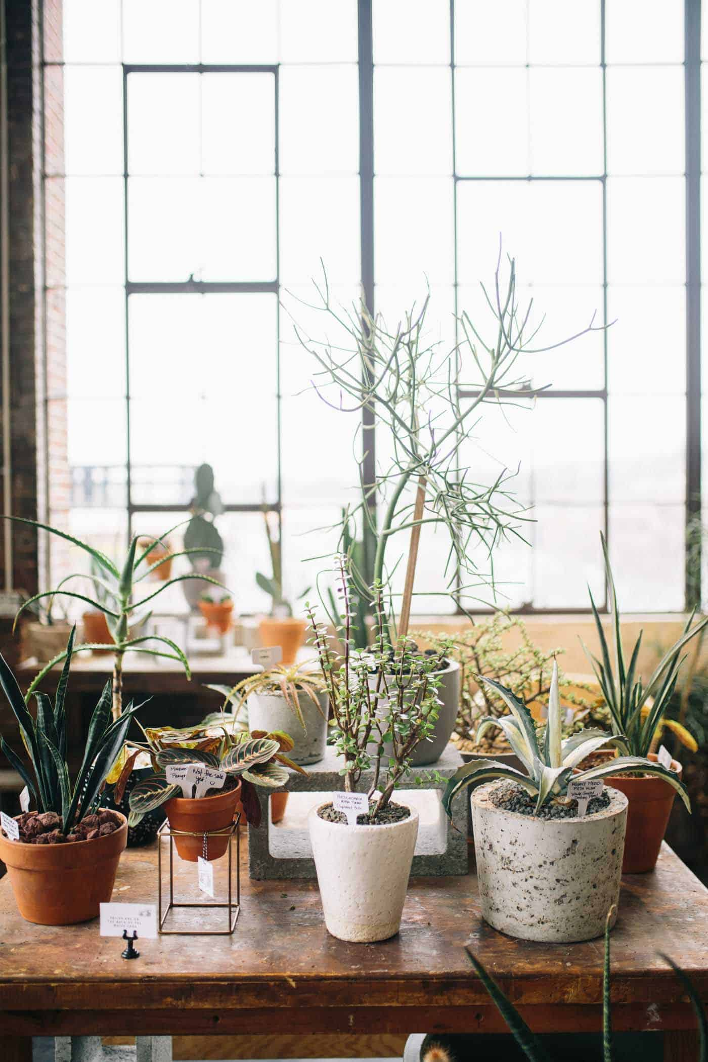 Unusual House Plants For Sale The Best Indoor Plants You Can Keep Alive My Style Vita