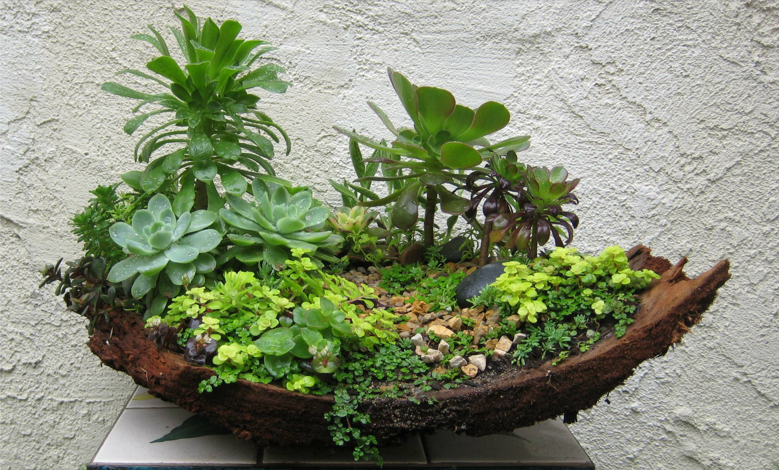 Miniature gardens my succulents and designs