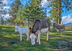 Baby Donkey Family 9627 FB WM