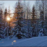 Snön lyser vit på björk och gran...