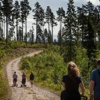 Skogarna i Bergslagen