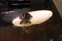 Basking Lamp For Turtles. Proper Lighting For Your Turtle ...