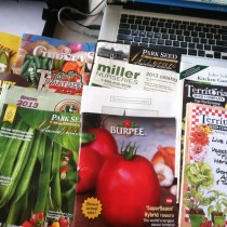 A small portion of the seed catalogs I receive