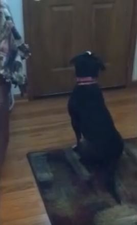 Adopted Dog Cries When Her New Mom Left Her For The First Time