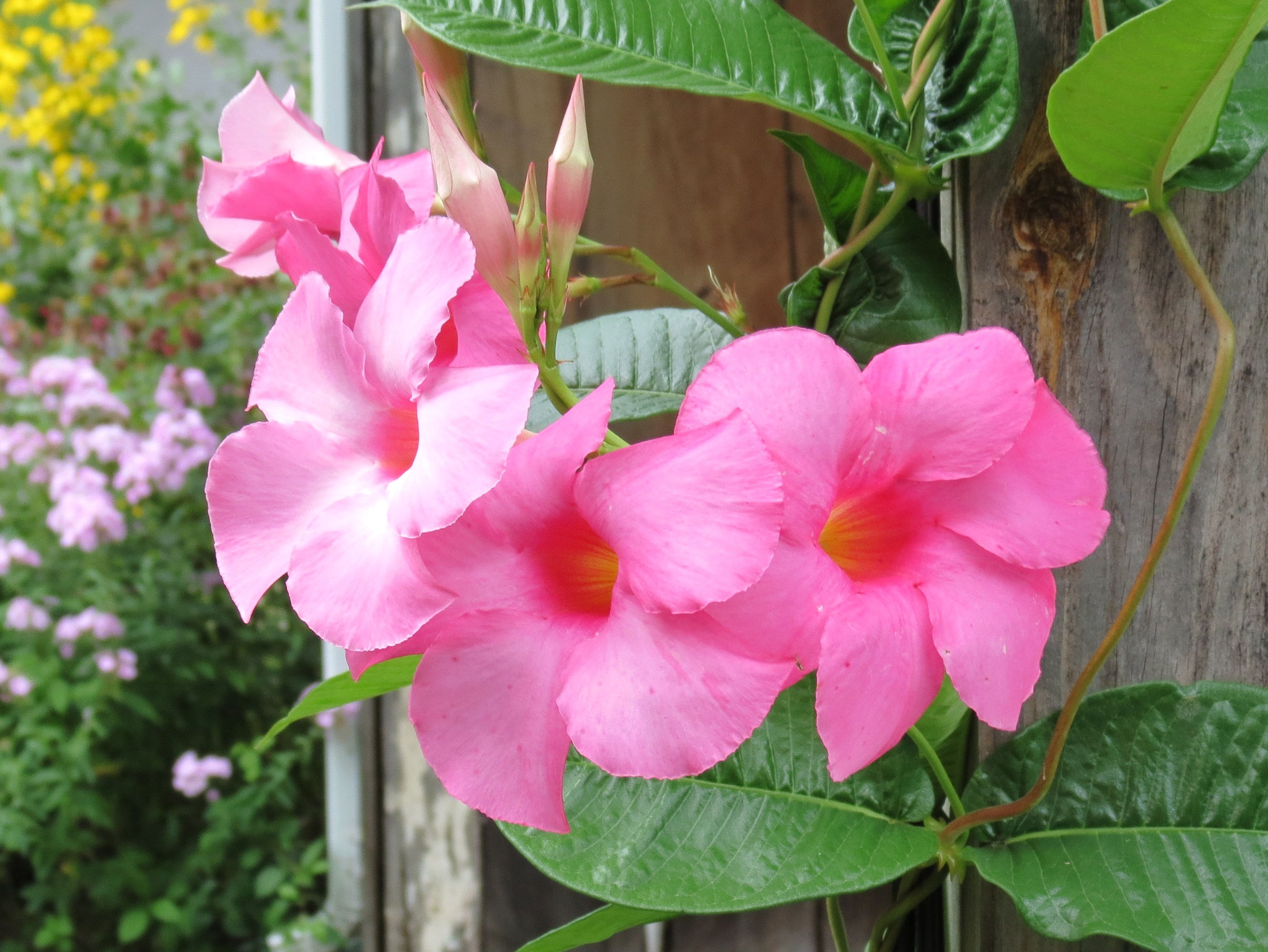 My Yellow Farmhouse Blog Photos Of My Gardens And The Unexpected Perks Of Being A