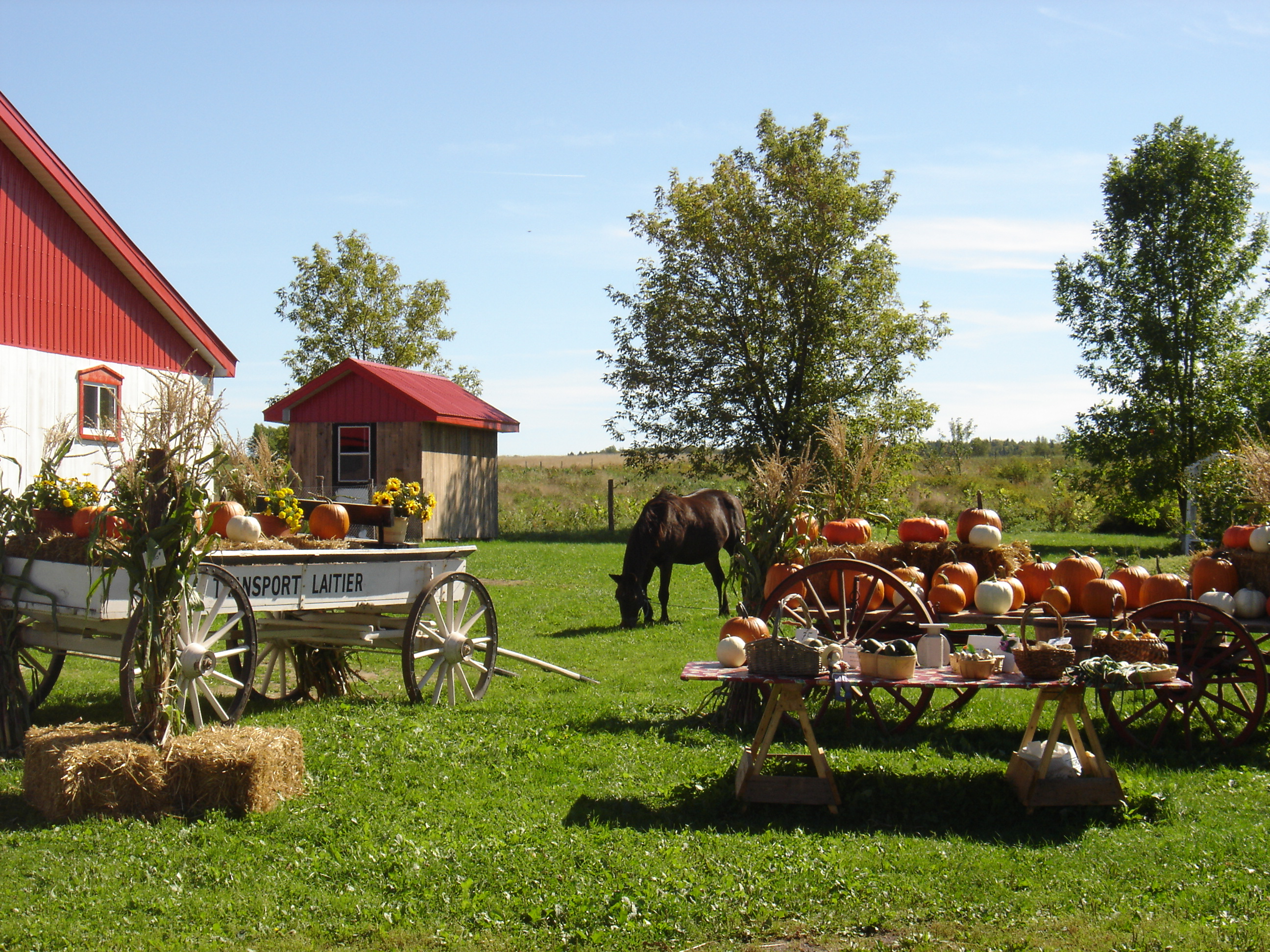 My Yellow Farmhouse Blog Good Grief Charlie Brown Its A Pumpkin Patch Ice Cream