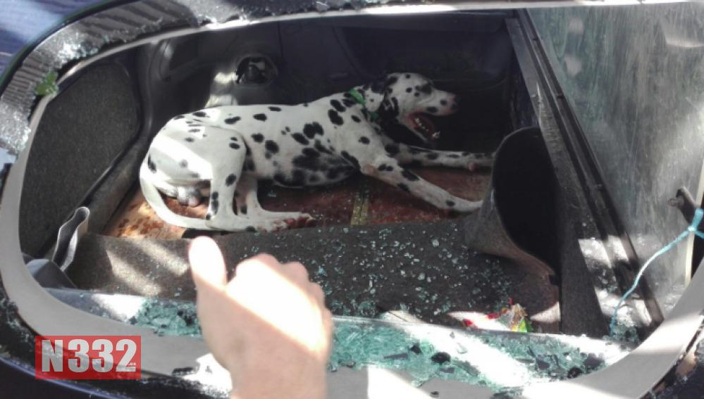 Badajoz Police Rescue Dog from Car