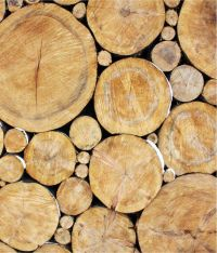 Buy Wallpaper Inc Wood Wall Decor Online at Low Price in ...