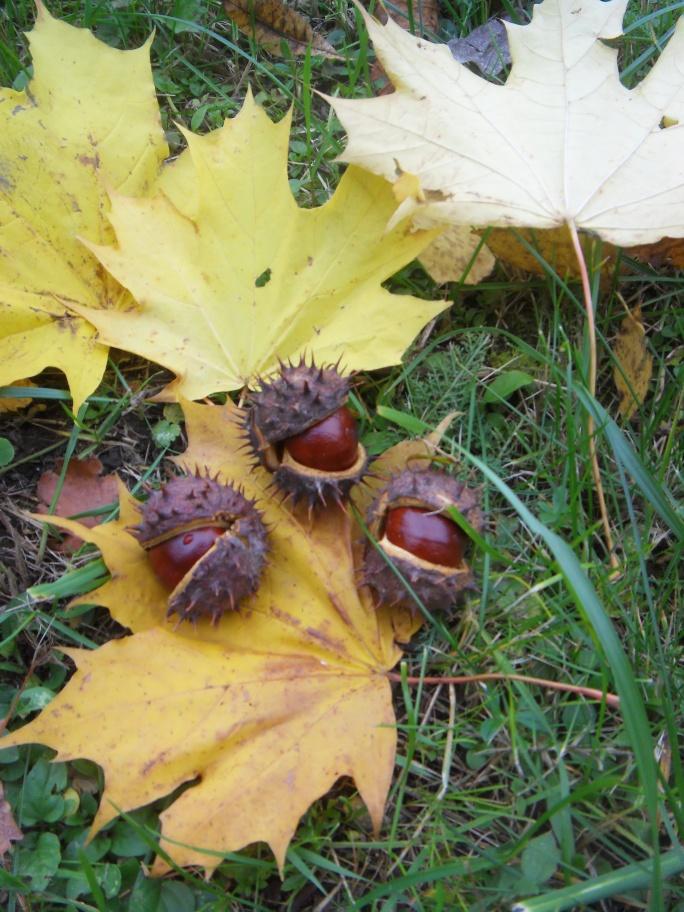 Осенние ёжики