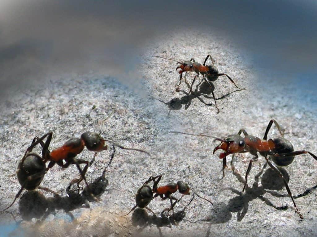 Was Kann Ich Gegen Ameisen In Der Küche Tun | Ameisen In Der Küche ...