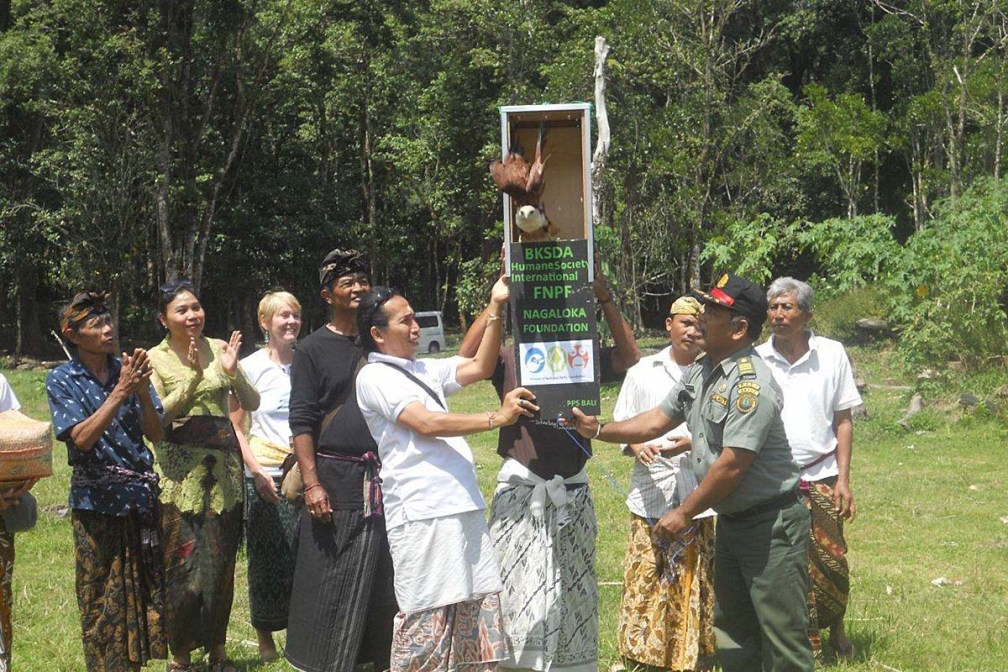 Changeable Hawk Eagle Released by Police & Forest Ministry Officials