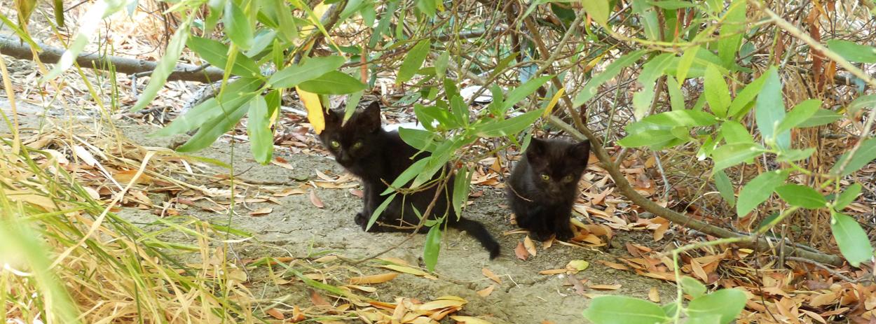 Orphaned Kitten Care - Napa Humane