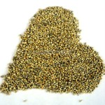 Whole_Bajara_Seeds_Millet_Grains_1