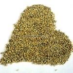 Whole_Bajara_Seeds_Millet_Grains_1