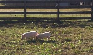 Nashville-Fun-For-Families-Honeysuckle-Hill-Farm-17
