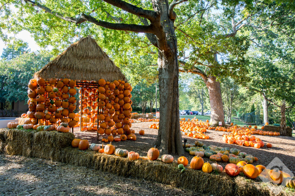 Free Fall Mums Wallpaper Pumpkin Patches Corn Mazes Amp Hay Rides Nashville Guru