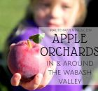 Apple Orchards near Terre Haute and the Wabash Valley
