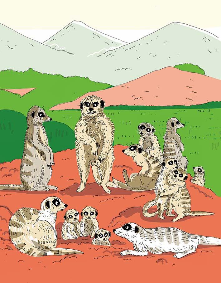 la vie amoureuse des animaux SURICATES by nathalie desforges