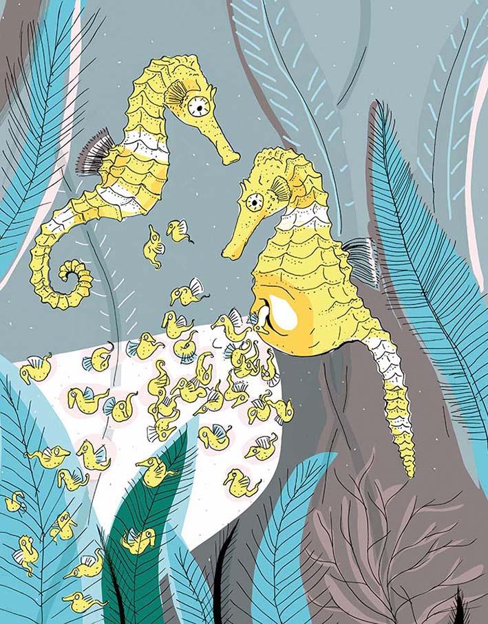 la vie amoureuse des animaux p51_HIPPOCAMPES by nathalie desforges