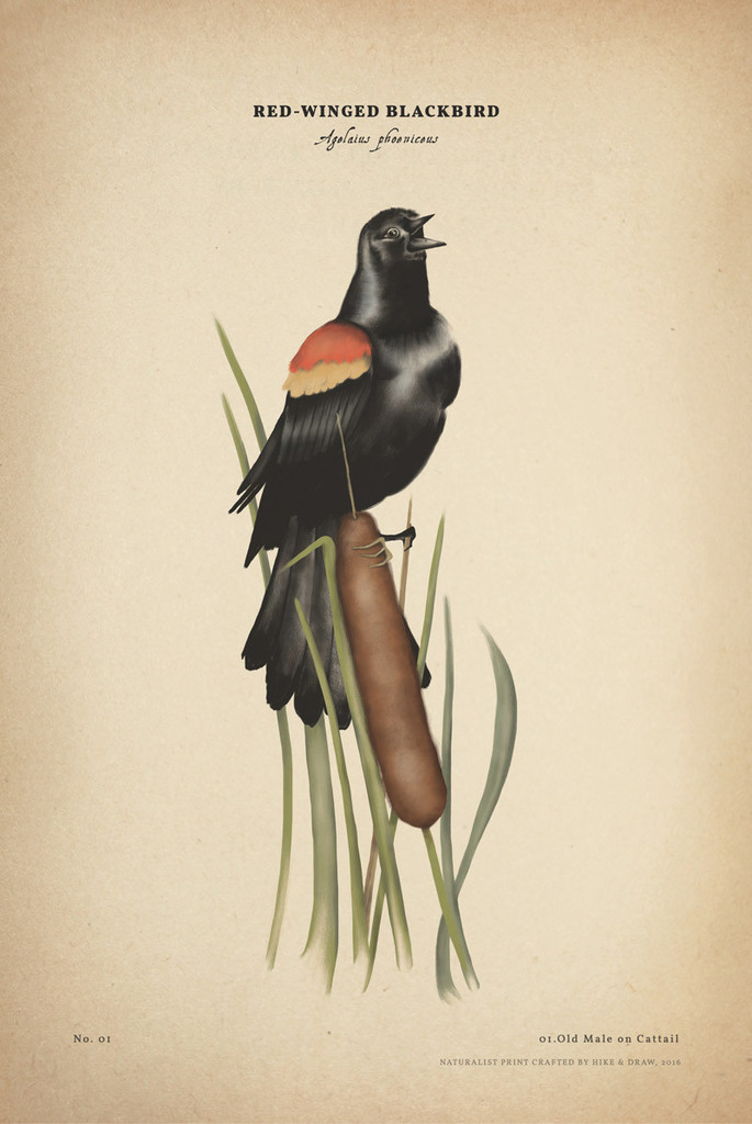 a_creative_call_to_connect_with_nature_redwind_blackbird_naturalist_print