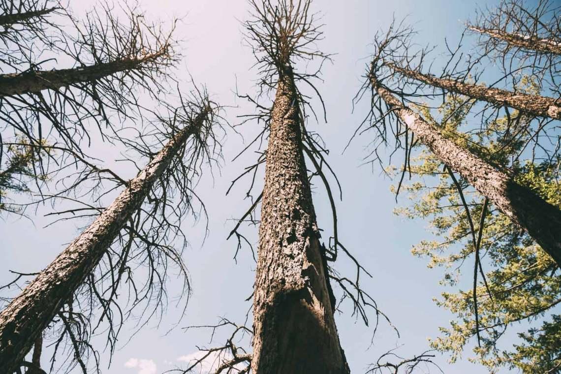 escape_natural_park_quest_karla_trees