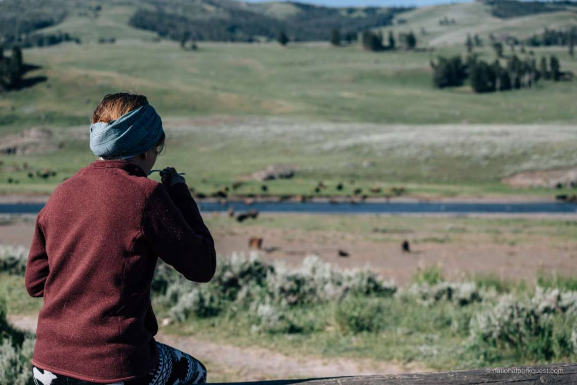 Observing bison while eating a quick breakfast in Lamar Valley.