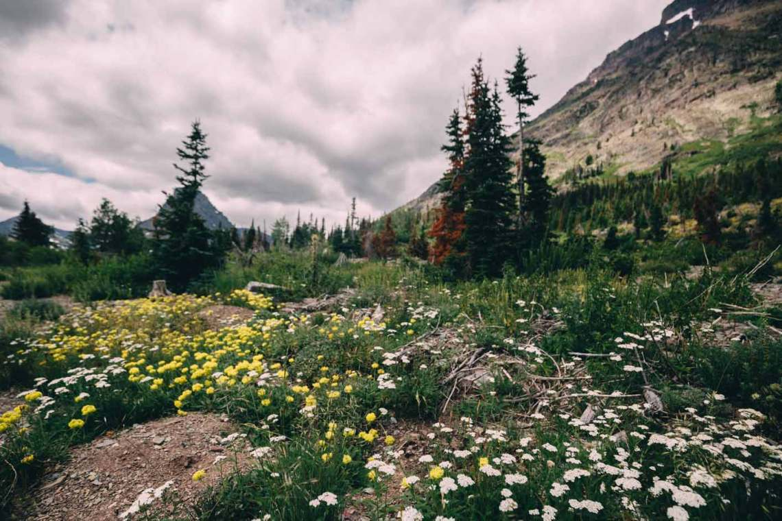 magical_glacier_national_park_wildflowers_meadow