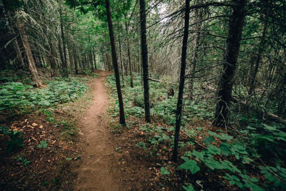 forest_trail_isle_royale_national_park3_tips