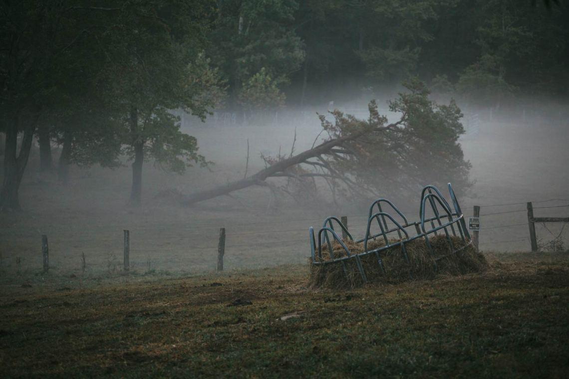 cades_cove_history_farm_trees_morning