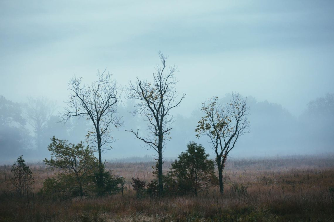 cades_cove_no_car_loop_field_trees