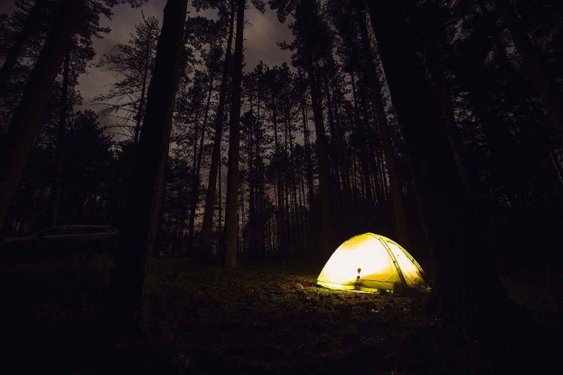 six_creepy_tales_national_park_quest_trees_camping