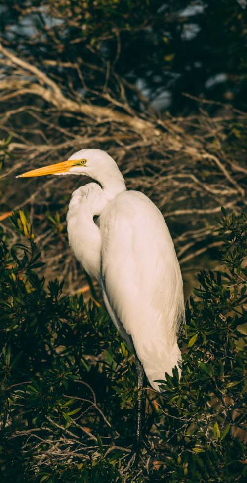 letter_for_birds_national_park_quest_2