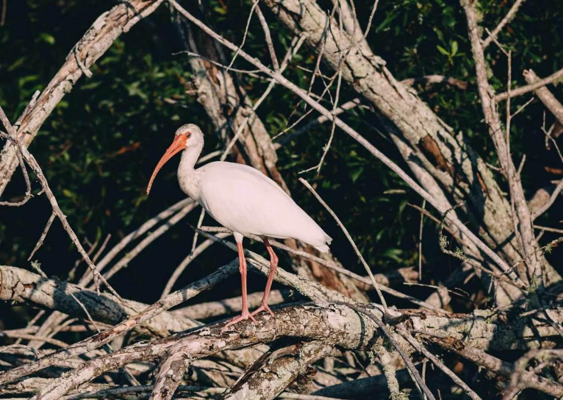 letter_for_birds_national_park_quest_4